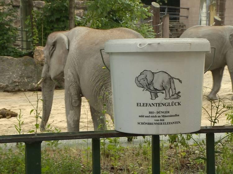 Elefanten Kot Als Wundermittel Im Garten W24