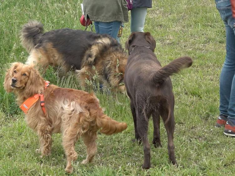 "Favoriten: Neue ""Hundepark-Tour"""